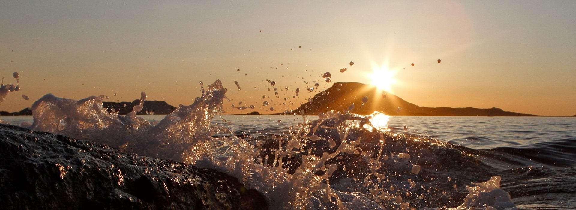 Sjøskvulp i solnedgang. Foto.